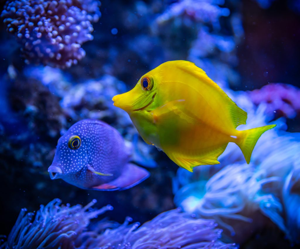 Florida's beautiful marine life includes bright-colored yellow and blue fish