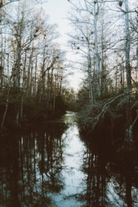 River surrounded by trees in the Everglades